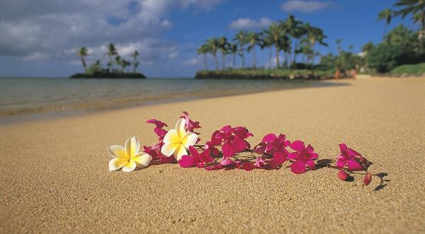 hawaiifoire